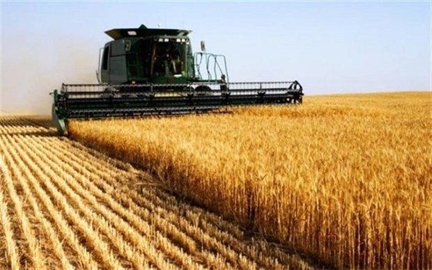 کشور نیازی به واردات گندم ندارد