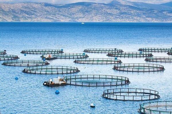 نخستین مزرعه بومی پرورش ماهی در دریا راه اندازی می شود