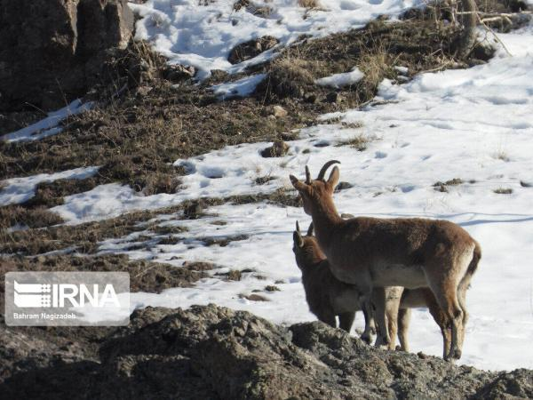 خبرنگاران ممنوعیت شکار در هشت منطقه استان همدان تمدید شد