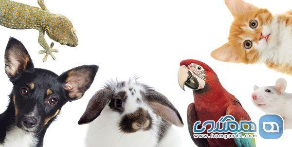 چرا نباید به حیوانات مواد استریل کننده بزنیم؟