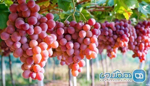 میوه ای که خوردنش مثل ضدآفتاب عمل می نماید
